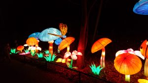 Paddenstoelen in China Lights