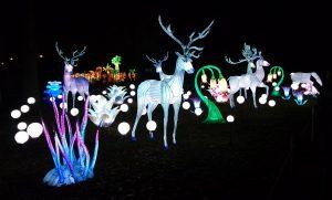 groep dieren China Lights